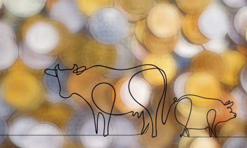خوک یا گاو؛ ثروت اندوزی یا کوشش و باروری؟